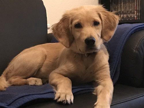 Mein Hund Cooper